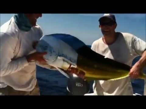 Bull Dolphin Florida Keys Reel Adventures