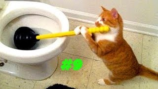 Смешные коты и котики, приколы про котов до слез - Смешные кошки #9