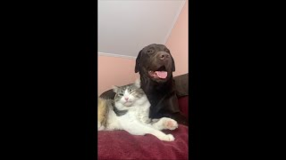 Cat Couldn't Handle Dog Breath and Made Throw up Sound