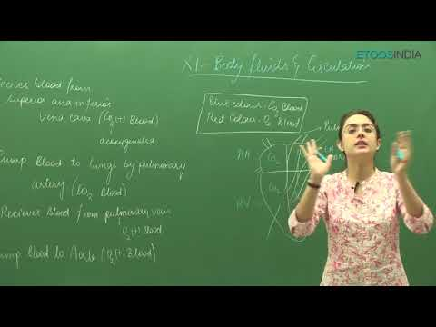 CBSE video lectures of  Body Fluid and Circulation by Dr  Meetu Bhawnani MB Mam