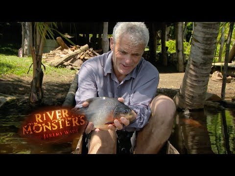 The Vegetarian Pacu  | PACU | River Monsters