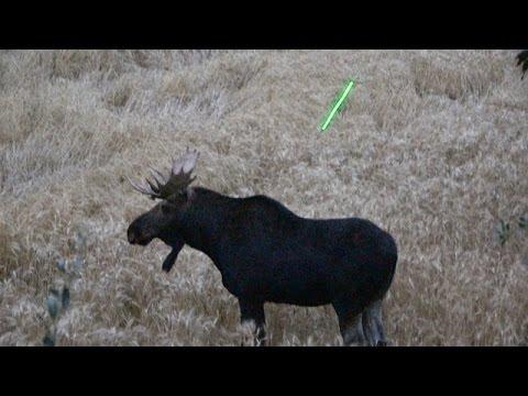 Amazing Archery Moose Kill *Graphic*