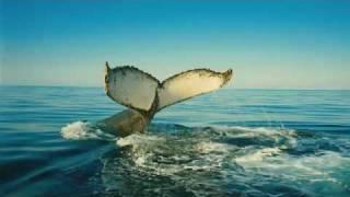 Wild Ocean -  trailer - HHHHHQ - In theaters: Coming Soon