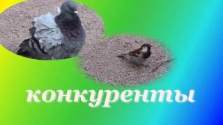 Конкуренты  среди птиц