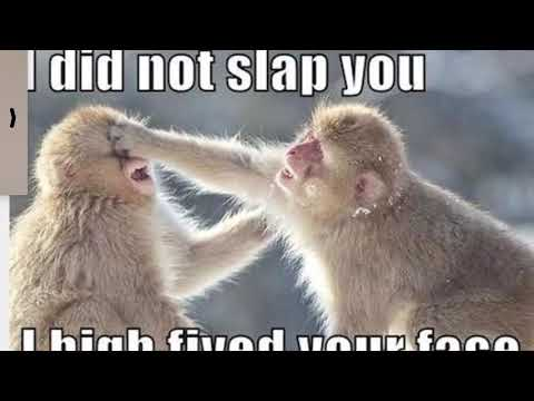 Funny Animal Memes you will DIE laughing #TryNotToLaugh ...