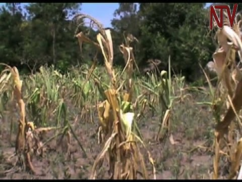 Drought to have major impact on economic growth