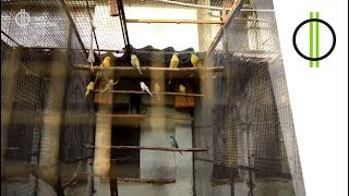 Matyi bácsi, az amazon és a többiek – 50 papagájjal az élet