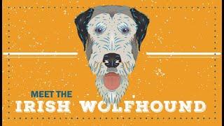 Irish Wolfhound   CKC Breed Facts & Profile