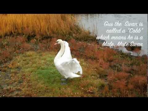 Chelsea Creek, Chelsea, Massachusetts, White Staircase Project, Gus the Swan