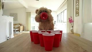 Munchkin plays beer pong