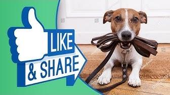 Kinh nghiệm chọn mua vòng cổ dây xích chó phù hợp nhất