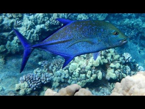 best-hawaii-snorkeling