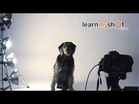 Pet Photography: How to photograph a Dog | LearnMyShot.com