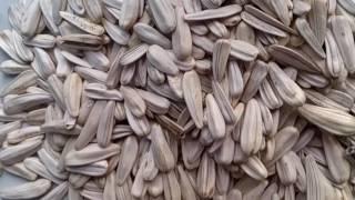 Белые семечки подсолнуха пр-во Турция