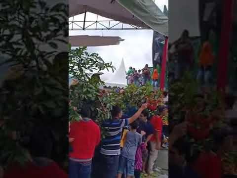 JEBUR Ke Sawah Berebut Durian Di Kota Trenggalek