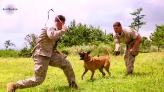 Military Working Dogs Training With Marines