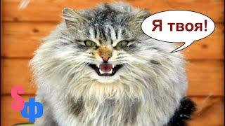 КОШКА с криком Я твоя возьми меня гонялась за котом