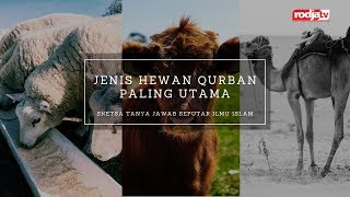 Sketsa Tanya Jawab: Jenis Hewan Qurban Paling Utama l Ustadz Abu Yahya Badru Salam, Lc.