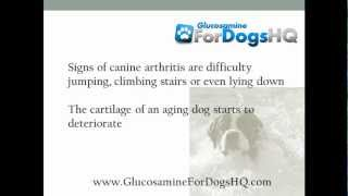 Can Dogs Take Human Glucosamine Pills