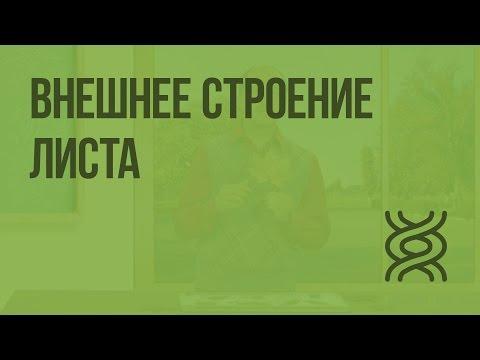 Видеоурок по биологии 6 класс сухорукова