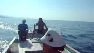 giresun balık avından dönüş