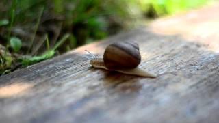 Snail/Puz