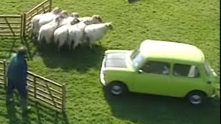 Scaring Sheep | Funny Clip | Classic Mr. Bean
