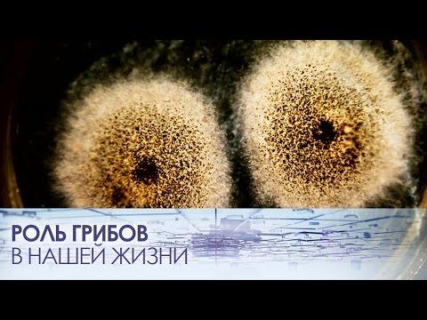 Важная роль грибов в нашей повседневной жизни