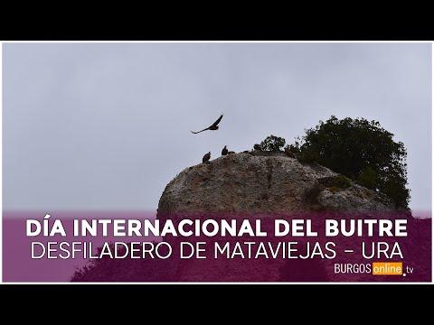 DÍA INTERNACIONAL DEL BUITRE | Desfiladero de Mataviejas (Ura, Burgos) from YouTube · Duration:  2 minutes 15 seconds