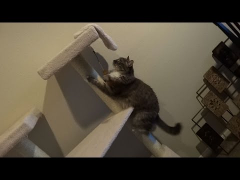 Cat climbing fail and attack on sister