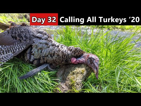 Turkey Hunting Hill Country Gobblers – Public Land Hunting – Calling All Turkeys