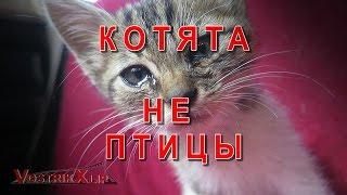 Котёнок Лесик Котята не птицы