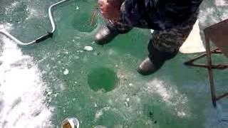 ЭКСТРИМ РЫБАЛКА В КОНЦЕ МАРТА(подледная рыбалка когда лед оттошел от берега на 6м., 2012-10-03T15:12:24.000Z)