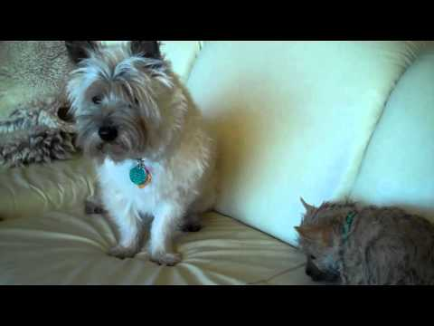 Mac Gets a Puppy ~ Bailey's  First Week