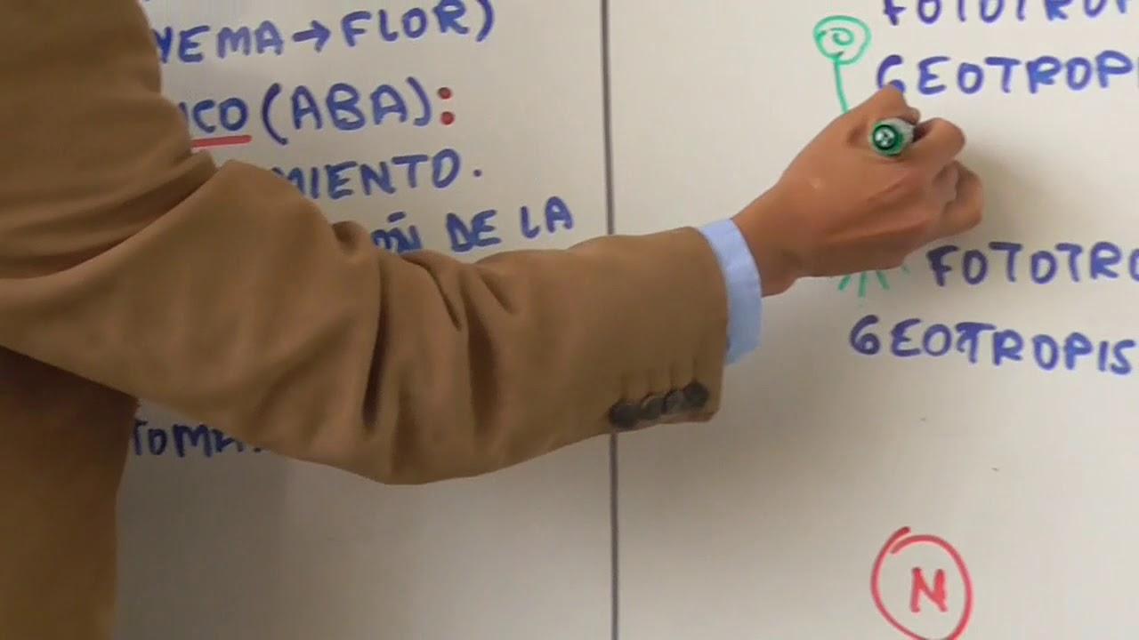 Biología 8 Sistema Endocrino y Sistema Inmunitario - Pedro Pedrozo