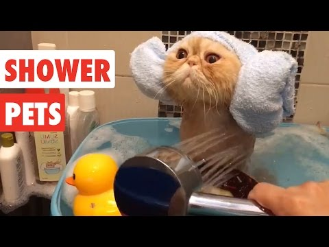 Shower Pets | Funny Pet Video Compilation 2017