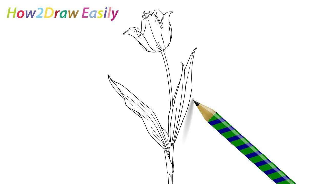 Uncategorized How To Draw A Tulip Easy how to draw a tulip flower easy drawing for beginners youtube beginners