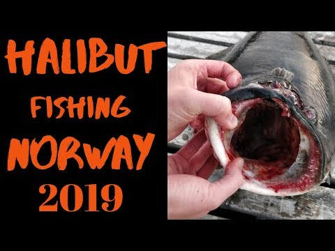Halibut Fishing In Norway 2019 4k