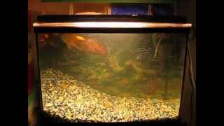 Homemade Fish Tank Filter (easy To Make And Can Save You Money) Part 3