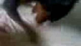 My Mini Doberman Mini Pincher:d (toto)