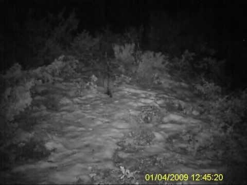 Wwf Italia Avvistamento Di Un Gatto Selvatico All Oasi Gole Del