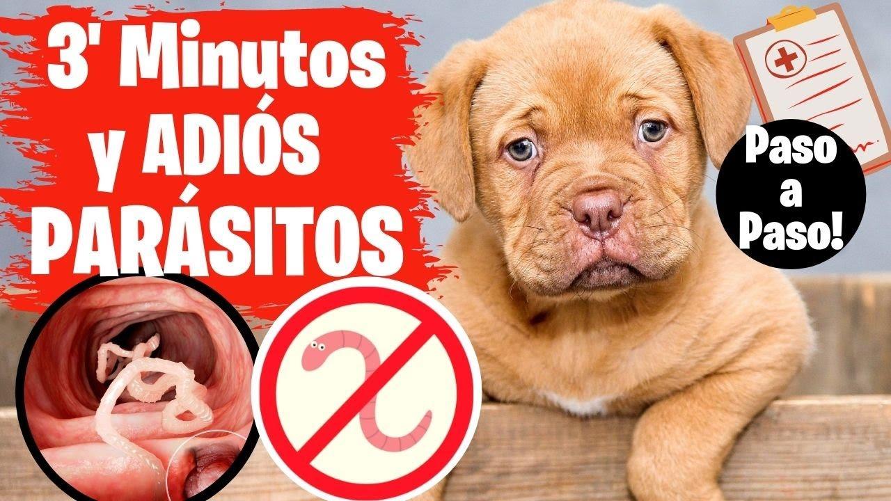 que darle a los perros cuando tienen parasitos