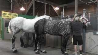 кони в яблоках \ horses