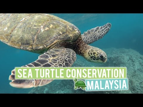 Sea Turtle Conservation in Malaysia