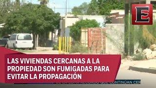 Queman y derrumban casa por invasión de garrapatas en Durango thumbnail