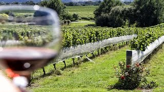 Как делают современное вино