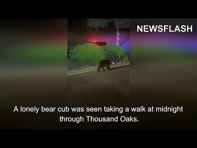 Bear Cub and Two Patrol Cars Take A Midnight Walk