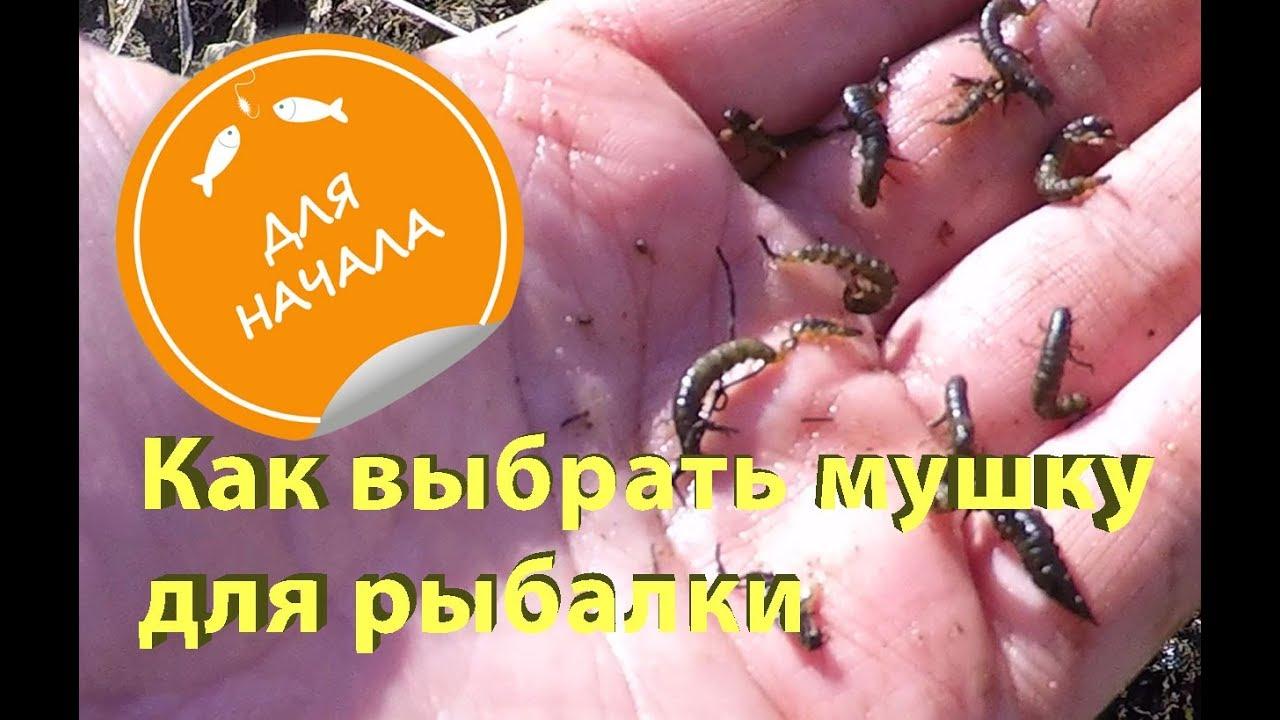 Как выбрать мушку для рыбалки. How to choose a fly for fishing.
