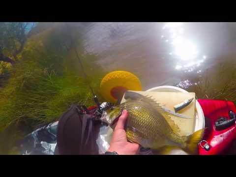 Moore River Fishing