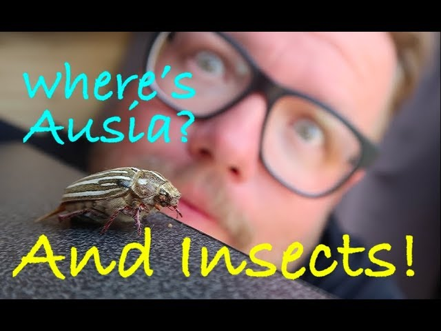 bug-friends-and-finding-ausia